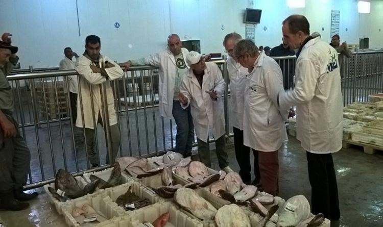استئناف أنشطة صيد الأخطبوط بالدائرة البحرية باسفي