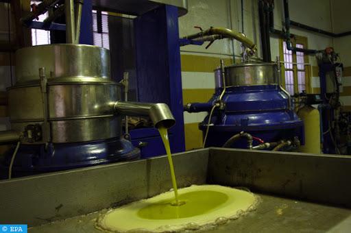بني ملال خنيفرة: قطاع الزيتون يساهم بنسبة 17 في المائة من الإنتاج الوطني