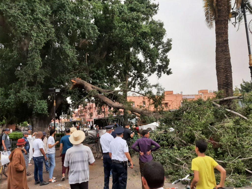 """عاجل سقوط شجرة على احدى عربات """" الكوتشي"""" بمراكش + صور"""