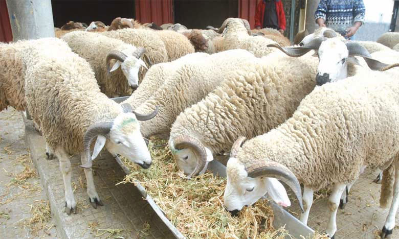 """""""أونسا"""" تؤكد على ان عيد الأضحى 1442 مر في ظروف جيدة على مستوى الجودة والصحة الحيوانية"""